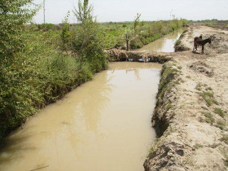 Environmental Feasibility Study